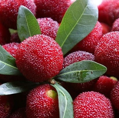 Myrica Rubra Seeds, Red Bayberry, 5pcs/pack