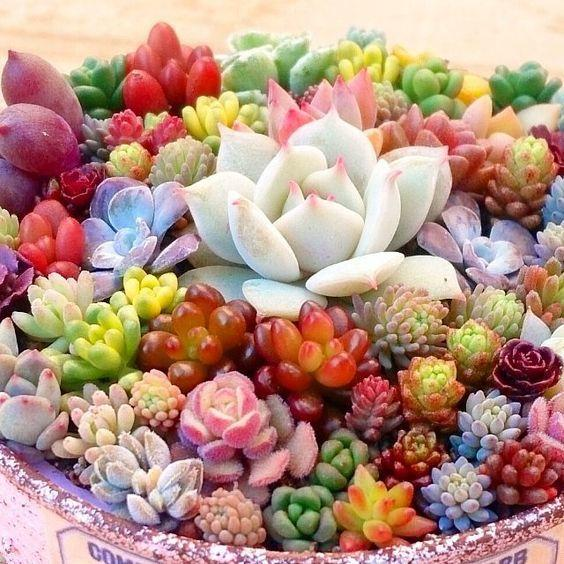 200pcs Rare Beauty Succulents Seeds Easy To Grow Potted Flower Seeds  Bonsai Seeds for Home & Garden mix color