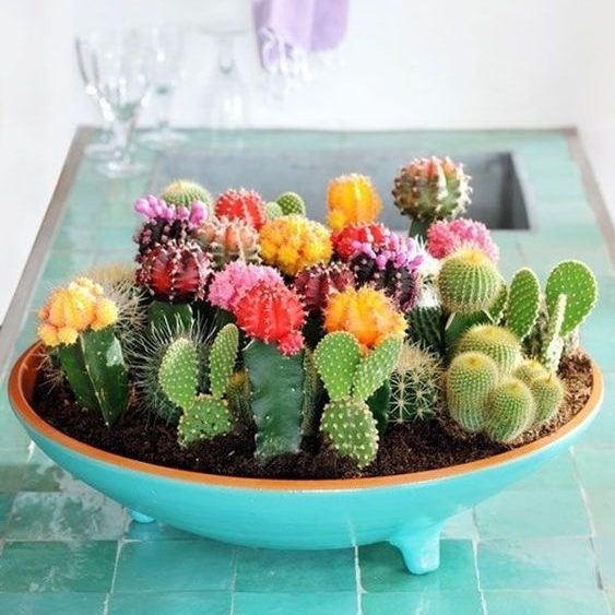 Multifarious Ornamental Plants, Mixed Cactus Seeds, 200pcs/pack