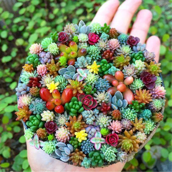 Mini Mixed Succulent and Cactus Seeds, 200pcs/pack