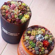 Mixed Lithops Seeds, Rare Succulent Seeds, 200pcs/pack