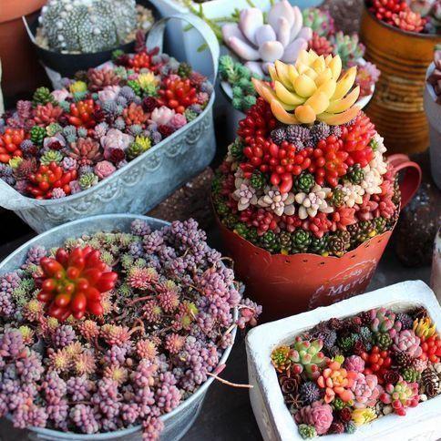 Mixed Succulent Seeds, Ass flower seeds Pseudotruncatella Living Stone bonsai mini garden, 200pcs/pack
