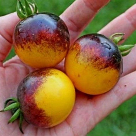 Very Rare Bumble Bee Tomato Seeds, 200pcs/pack