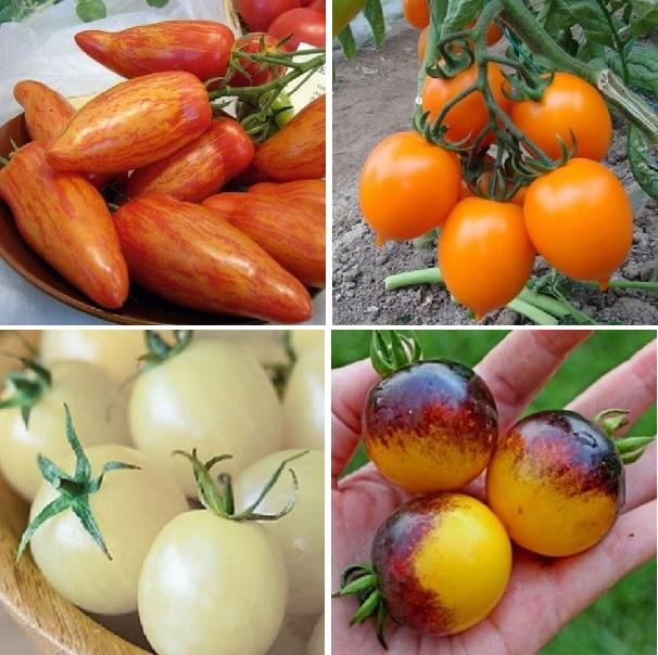Rare Tomato Seeds, 200pcs/pack