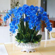 Blue Phalaenopsis Seeds, 100pcs/pack