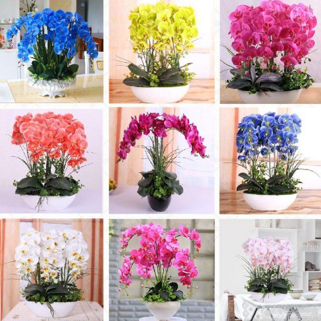 10 Varieties Phalaenopsis Seeds, Orchid Flowers Seed, 100pcs/pack