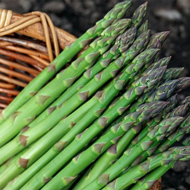 Asparagus Seeds, Vegetable Seeds, 100pcs/pack