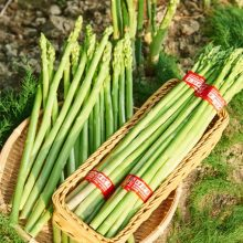 Asparagus Seeds, 100pcs/pack