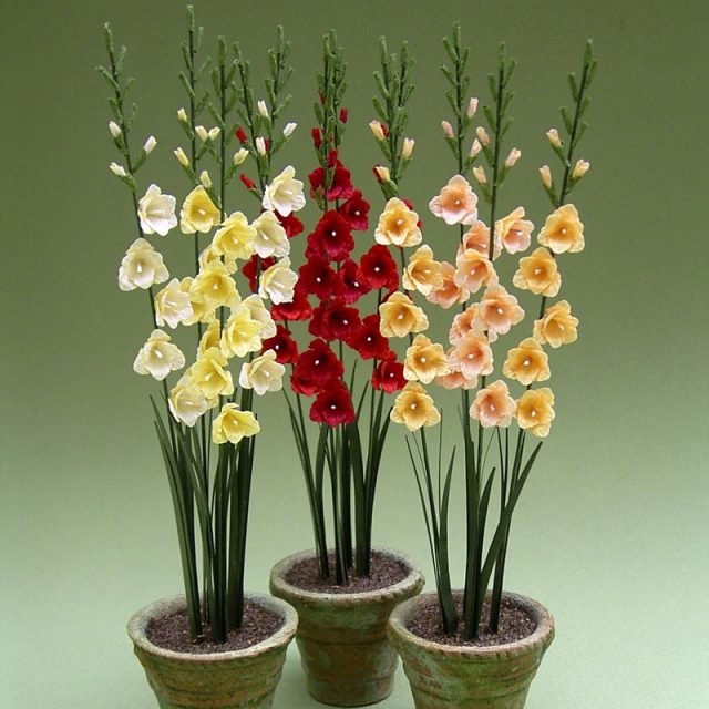 2pcs Random Gladiolus Bulbs