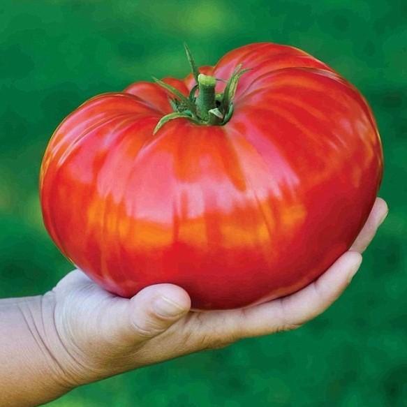 Giant Tomato Seeds, Beefsteak Tomato Seeds, 100pcs/pcak