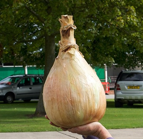 Rare Giant Onion Seeds, 50pcs/pack
