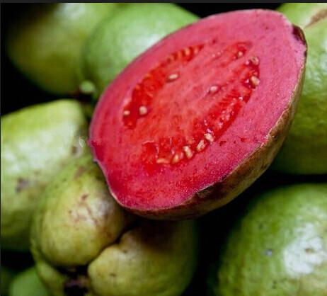 Sweet Red Guava Seeds, Psidium Guajava, 20pcs/pack