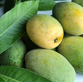 Mango Seed, Fruit Tree, 2pcs/pack