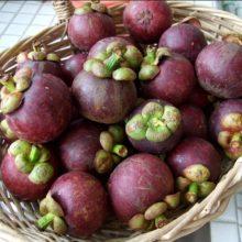 Mangosteen Fruit Seeds, 10pcs/pack