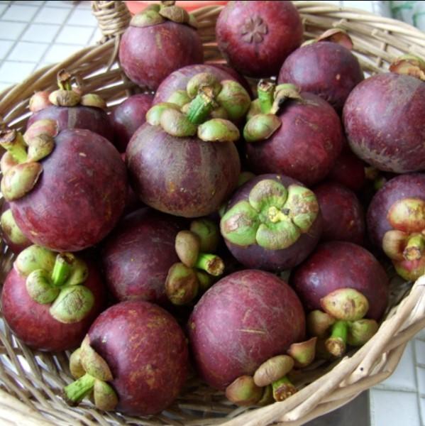 Mangosteen Seeds, Rare Fruit Seeds, 10pcs/pack