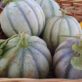 Cantaloupe Seeds ,Different kinds Honey Melon Seeds, 20pcs/pack