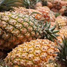 Pineapple Seeds, 100pcs/pack