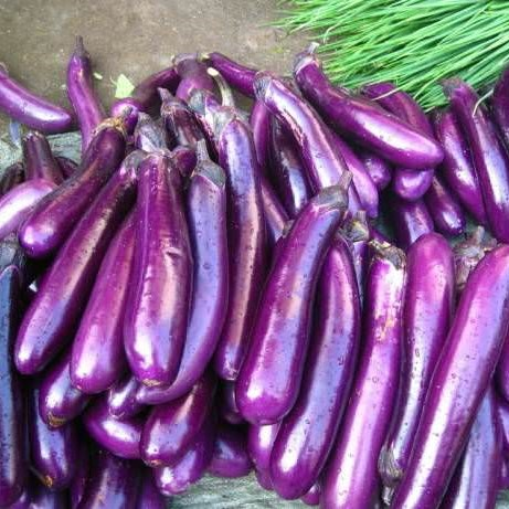 Purple Eggplant Seeds, 100pcs/pack