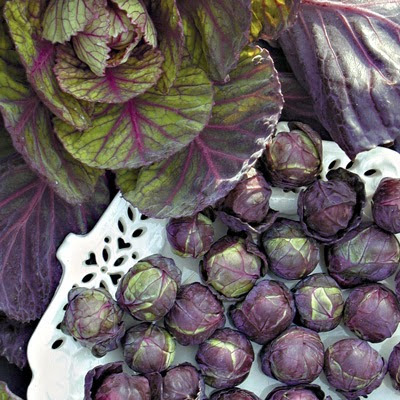 Purple Brussels Sprout Seeds, Cabbage Seeds, 100pcs/pack
