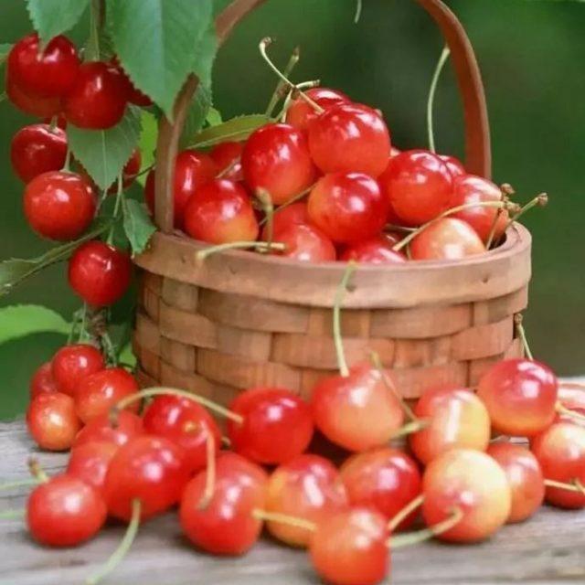 Cherry Seeds, Mini Cherry Fruit Tree Seeds, 20pcs/pack