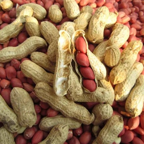 Peanut Seeds Red Skin,10pcs/pack