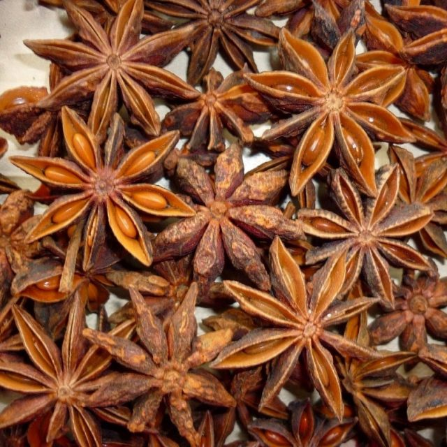 Star Anise Tree Seeds, 50pcs/pack
