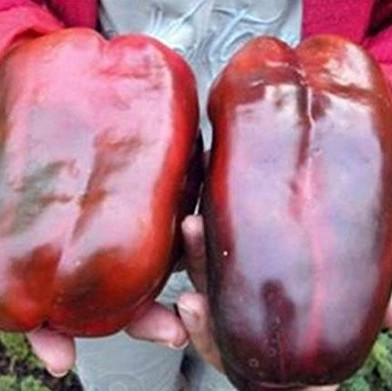 Giant Sweet Pepper Seeds , 100pcs/pack