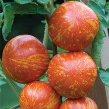 Cherry Tomato Seeds, Multi-Varieties, 200pcs/pack