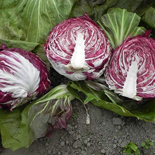 Rare Purple Cabbage Seeds, 200pcs/pack