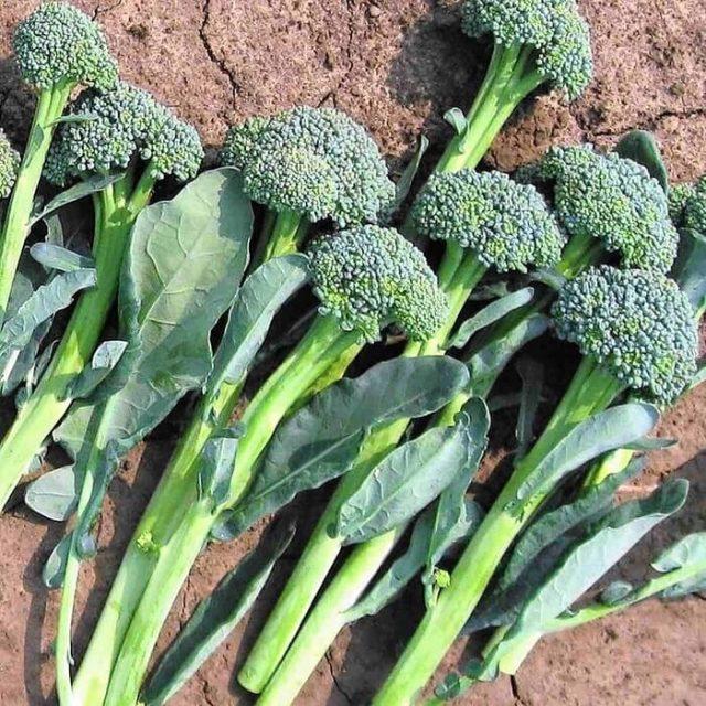 Broccoli Seeds, Cauliflower Vegetable Seeds, 100pcs/pack