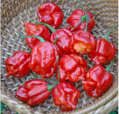 Peter Pepper seeds, 100pcs/pack