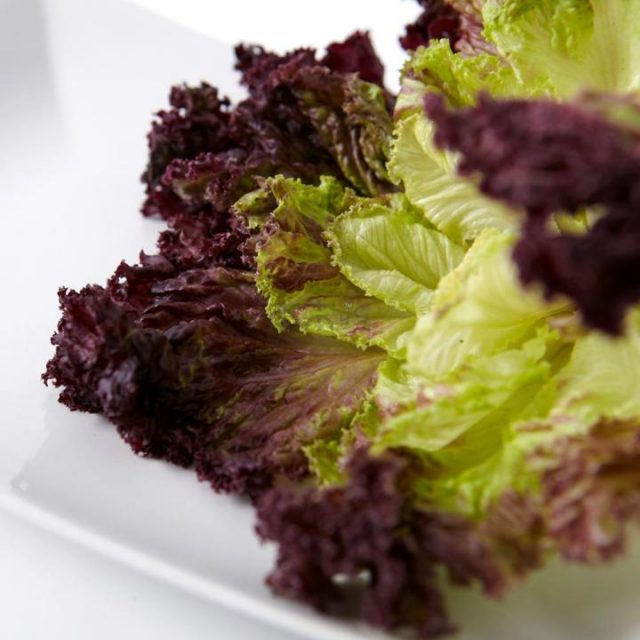Purple Lettuce Seeds, 200pcs/pack