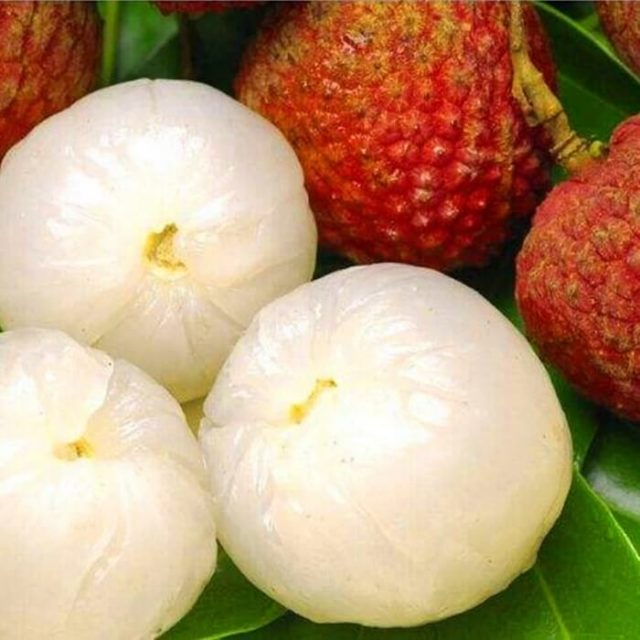 10 pcs Lychee Seeds Home Gardening Outdoor Fruit seeds litchi tree Sementes House plant pot Bonsai seeds