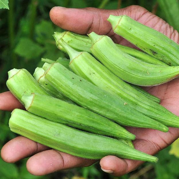 Okra Seeds, Vegetable Seeds, 20pcs/pack