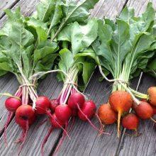 Beetroot Seed, Vegetable Seed, 100pcs/pack