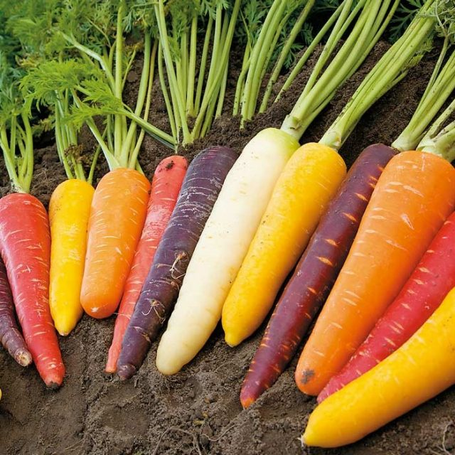 Mixed Rainbow Carrot Seeds, 100pcs/pack