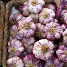Purple Garlic Seeds, 100pcs/pack