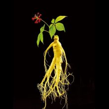 Ginseng Seeds, 10pcs/pack