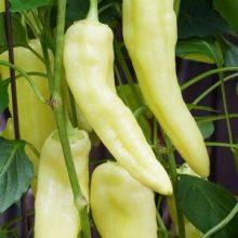 Multi-Varieties Hot Chili Seeds, Pepper Seeds, 100pcs/pack