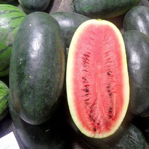 50 PCS/Pack Giant Watermelon Seeds Black Tyrant King Super Sweet Watermelon Home Gardening