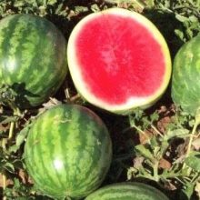 30pcs/pack Watermelon Seeds sweet & Square Watermelon juice very tasty easy-growing tropical fruit seeds for plant